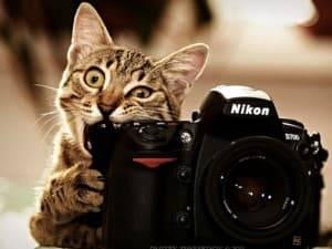 Красивые кошачьи клички для мальчиков