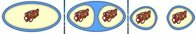Сходство прокариотических и эукариотических клеток заключается в