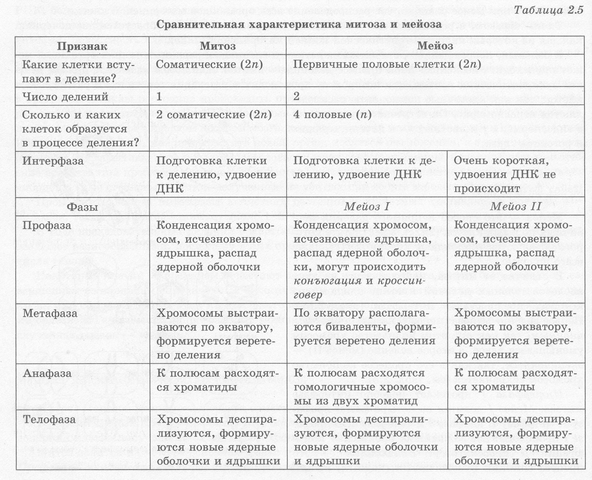 Этапы мейоза таблица