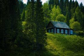 Какой из регионов россии богат лесными ресурсами