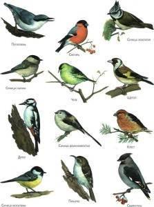 Когда птицы улетают на юг осенью