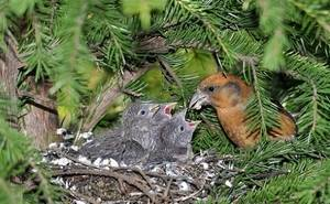 Какая птица откладывает яйца зимой