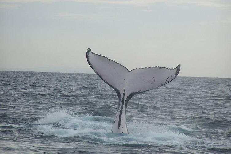 Кит и дельфин это рыбы или млекопитающие