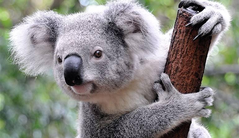 Медведь описание животного для детей