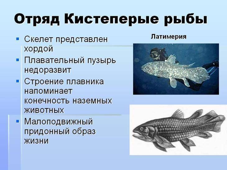 Кистепері риби