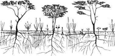 Сухие тропические леса