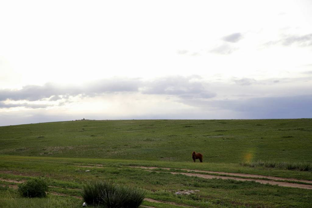 Монголия пустыня гоби