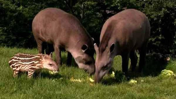 Животные экваториальных лесов 3 класс