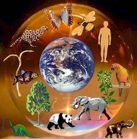 Эссе на тему человек и природа