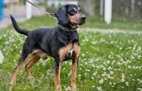 Универсальная охотничья собака