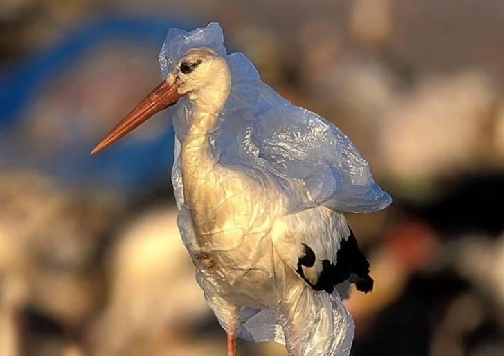Загрязнение природы фото