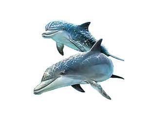 Водоплавающие животные список
