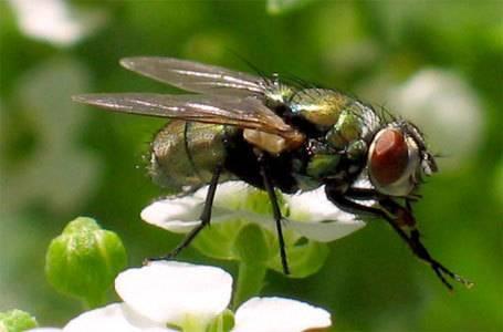 Когда появились мухи на земле