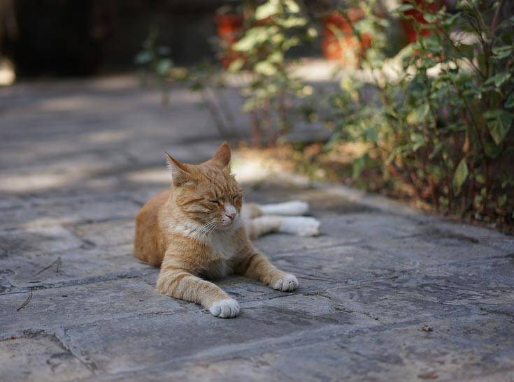 Сочинение про домашнего питомца кота