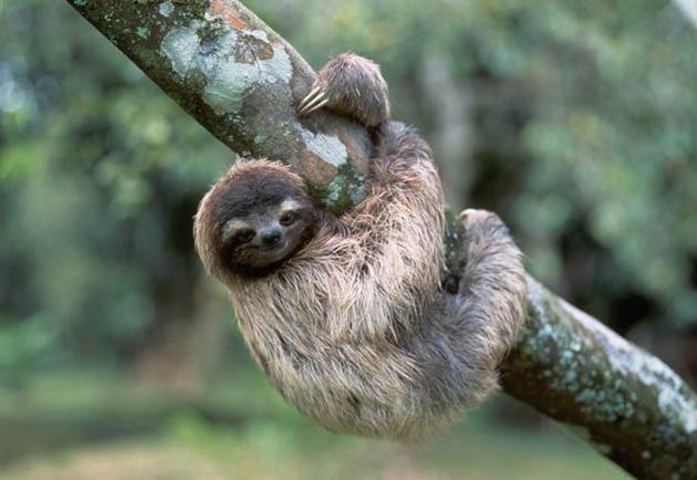Самое медленное животное в мире