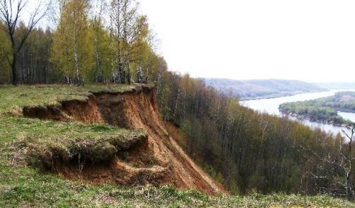 Деревья нижегородской области фото и названия