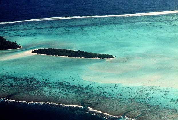 Коралловые рифы образованы