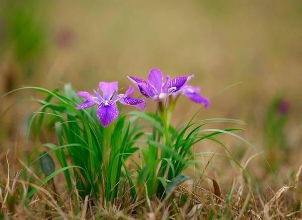 Приход весны сочинение