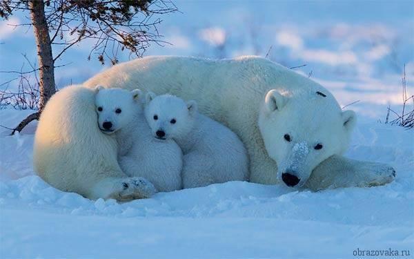 Зона арктических и антарктических пустынь