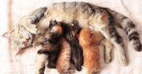 Какие животные относятся к млекопитающим список