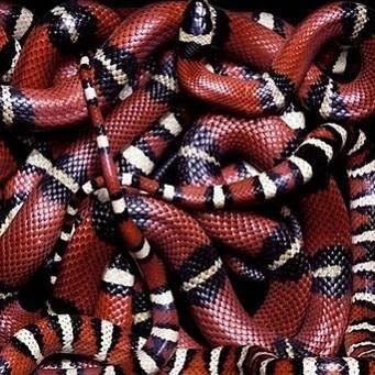 Как вылупляются змеи