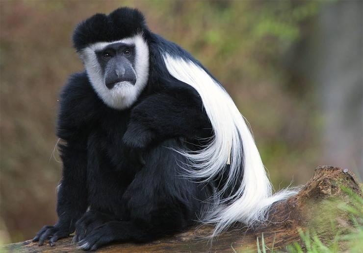 Животные южной африки