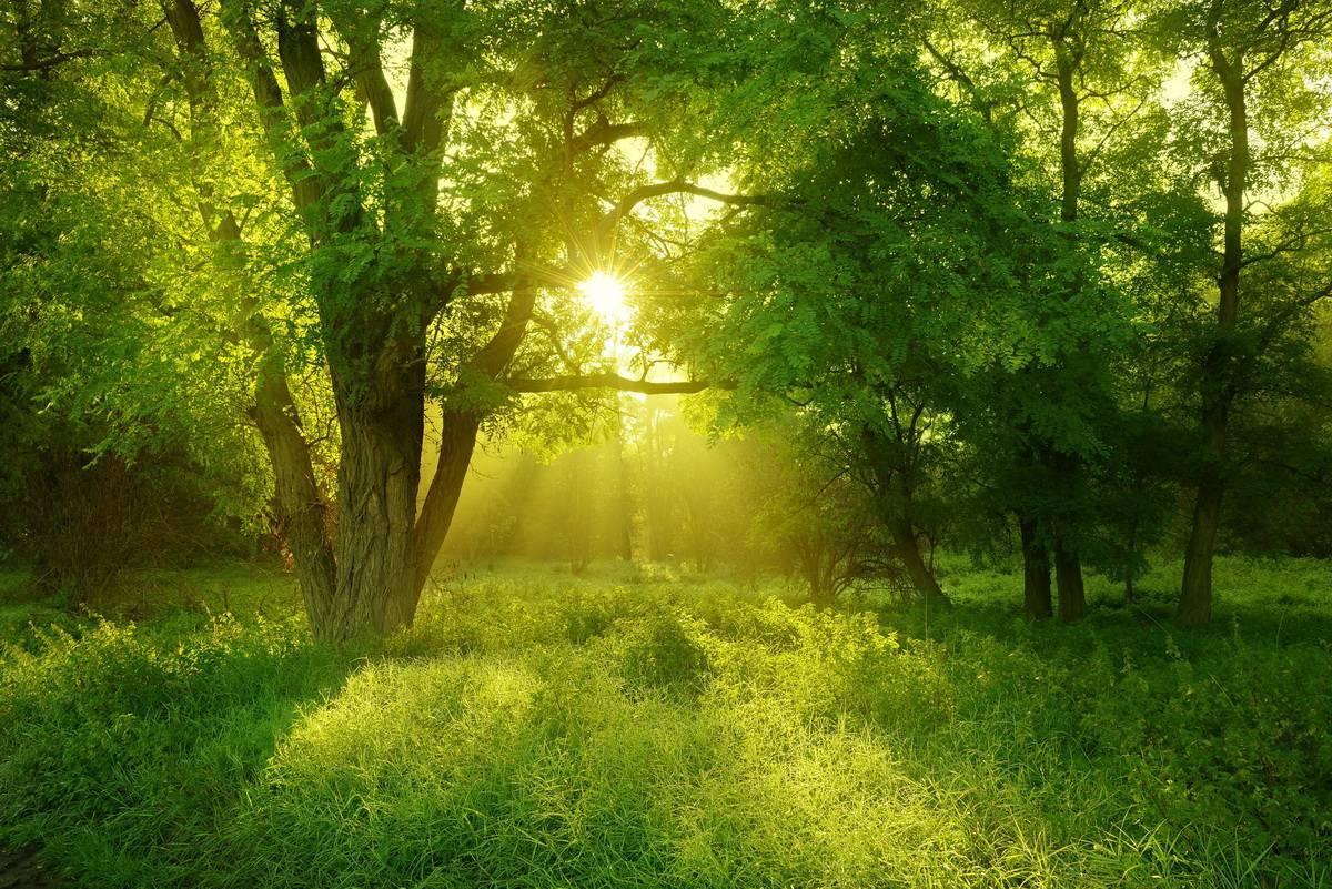 Лекарственные деревья