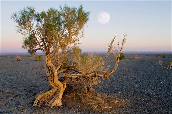 Заповедник пустынной зоны