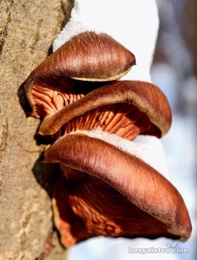 Образование спор у грибов