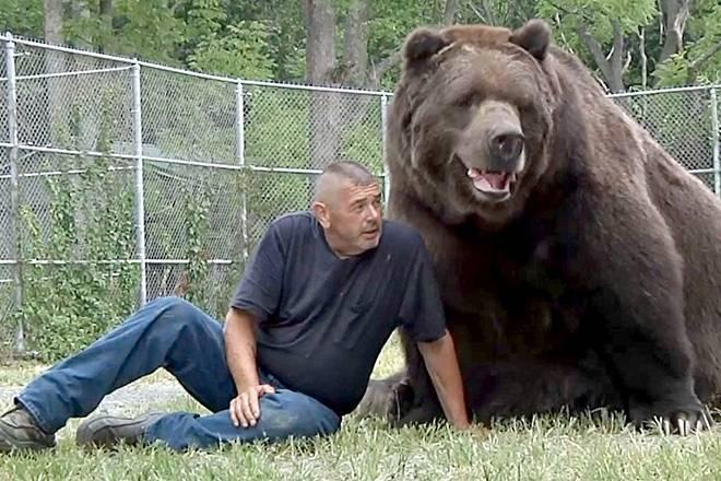 Бурый медведь интересные факты для детей