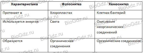 Заполните таблицу сравнительная характеристика фаз фотосинтеза