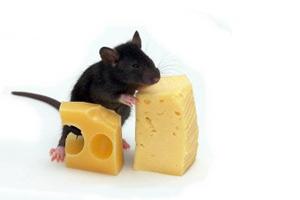 Корм для мыши фото