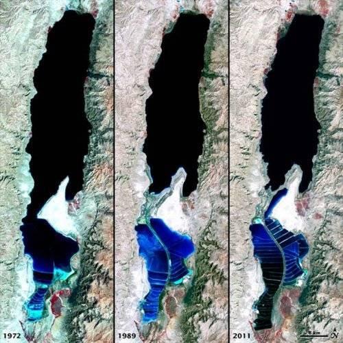 Мертвое море обитатели