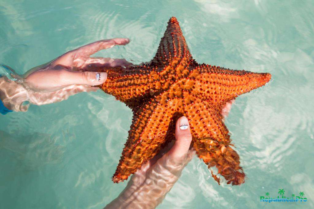 Что едят морские звезды