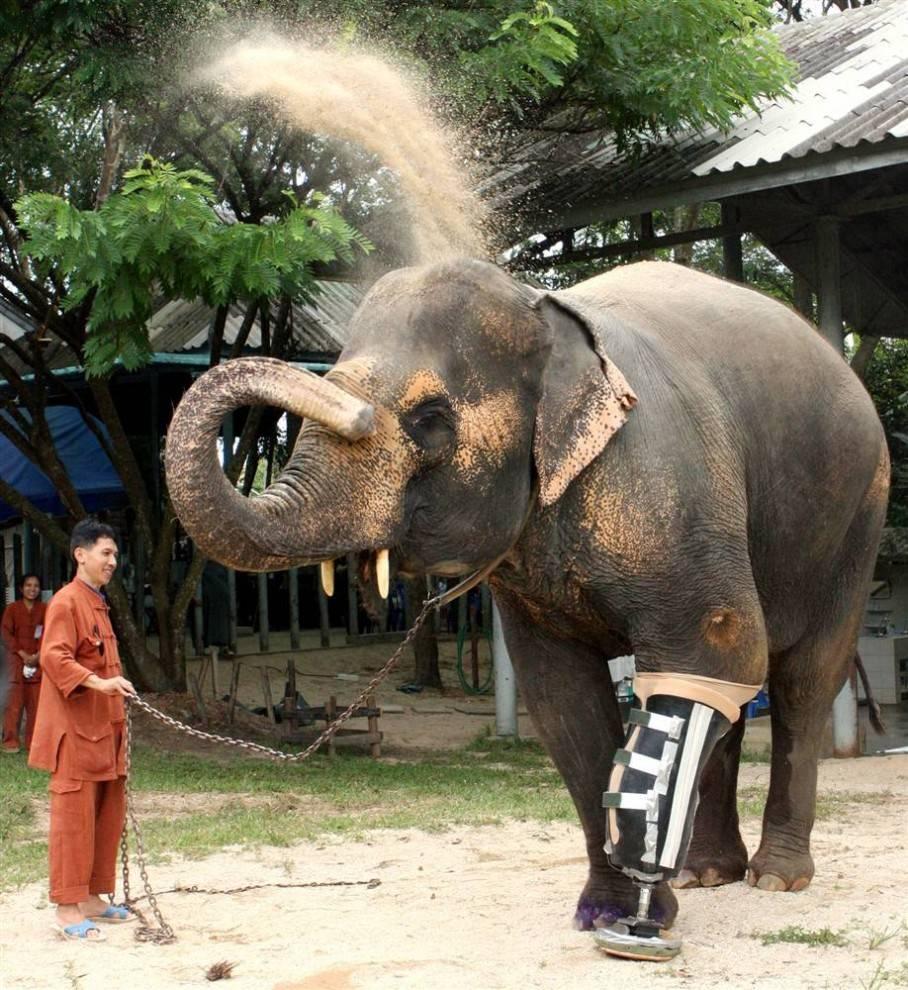 Сколько весит слон 5 тонн