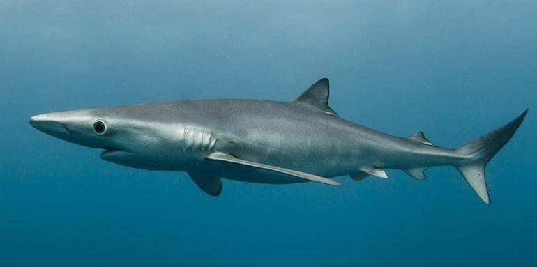 Какой вид рыб является рекордсменом по скорости