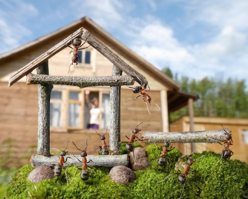 Как размножаются муравьи