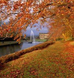 Тютчев осенние листья