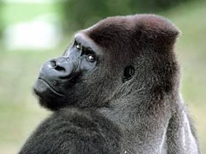 Предками отряда приматы являются