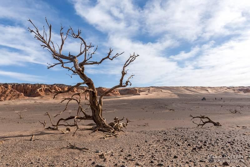 Монгольская пустыня