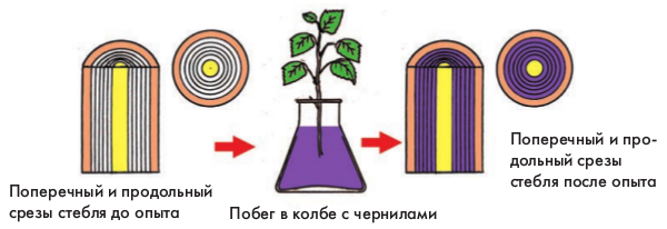 Какое вещество поглощают листья