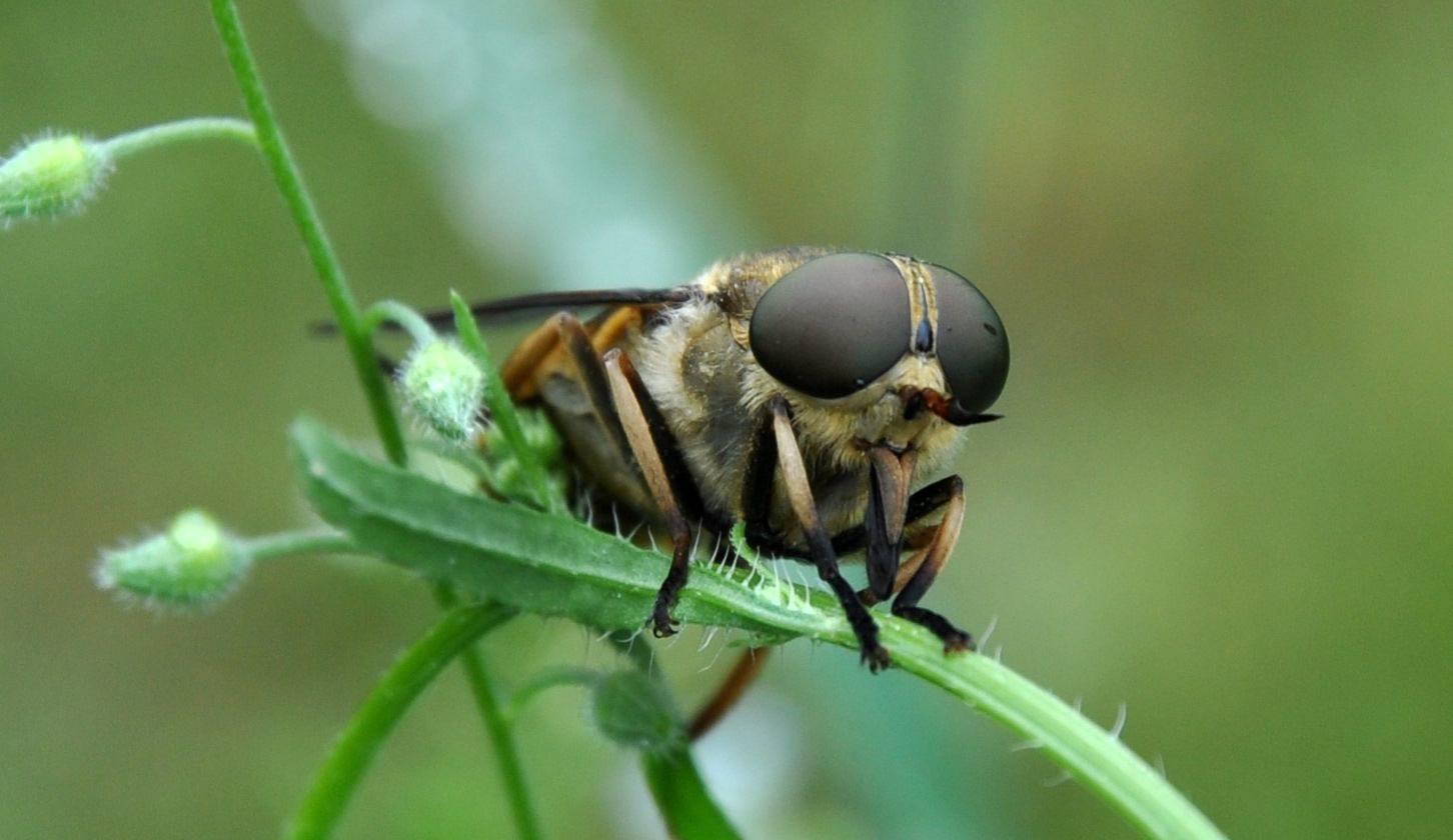 Самое сильное насекомое в мире