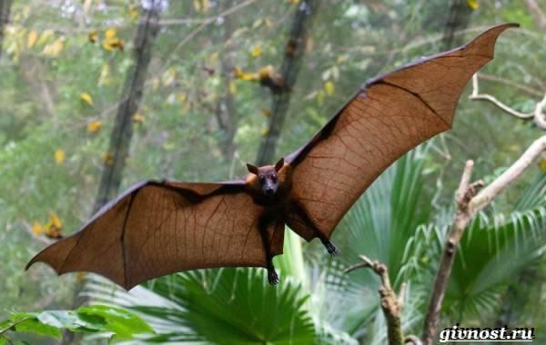 Растения и животные тропических лесов
