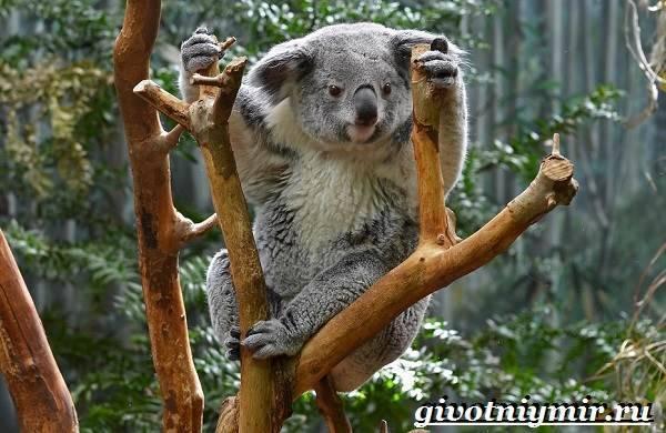 Какие животные живут в австралии список