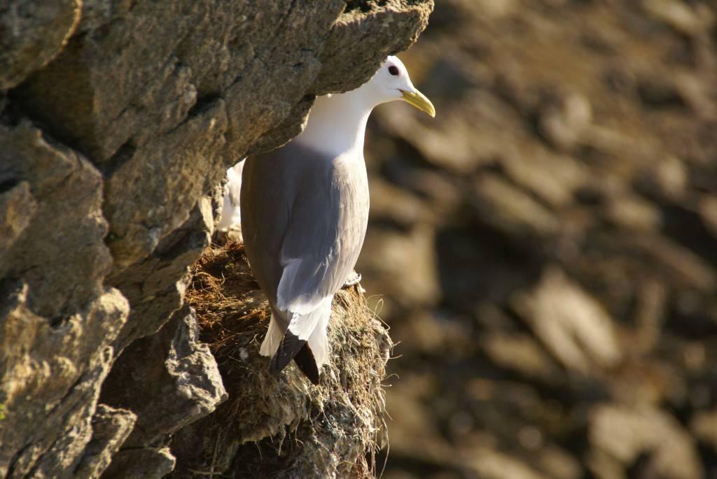 Какие птицы живут в арктике