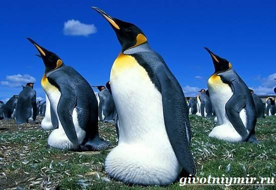 Сколько весит пингвин обычный
