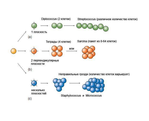 Способы размножения патогенных микроорганизмов