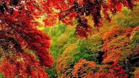 Осенний лес для детей