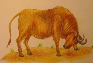 Как нарисовать овцебыка