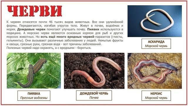 Виды животных классификация 3 класс